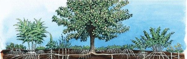 Зачем нужно садить разные полезные деревья?
