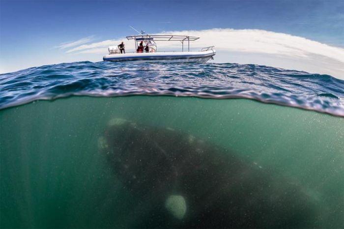 Что скрывается под водой: 34 невероятные фотографии (Фото)