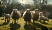 Ферма будущего (Видео)
