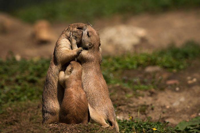 животные, хорошие родители