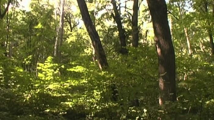 Лесной склад (Видео)