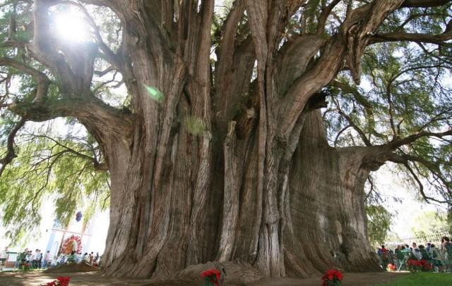 впечатляющие деревья