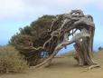 дерево долго на ветру