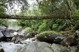 Мосты из живых деревьев