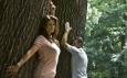 лечение дерево