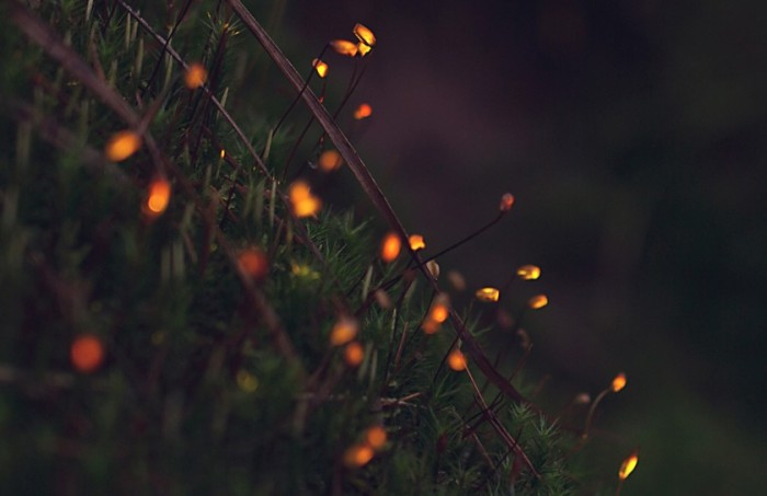 Биолюминесцентный лес (+Видео)