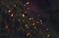 Биолюминесцентный лес