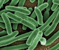 Пищевые эмульгаторы вредят кишечнику