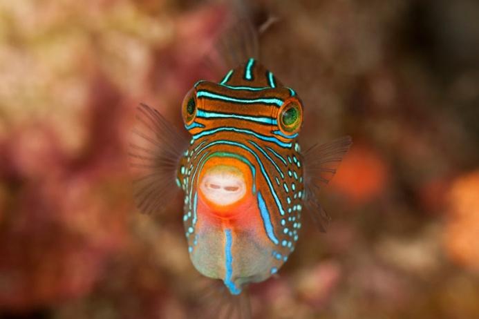 Самые красивые обитатели подводного мира