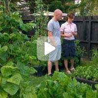 Огород без хлопот. Удобрение для огорода