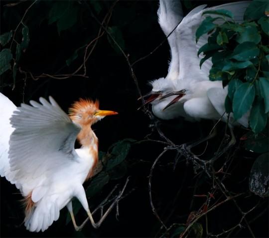 Очаровательные фотографии птенцов. Фотографии птиц от Джона и Фиш