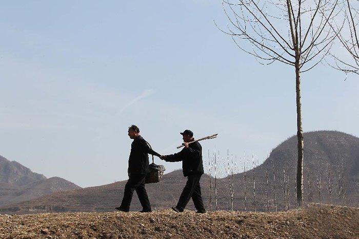 В Китае 10,000 деревьев за 10 лет посадили слепой мужчина и его безрукий друг