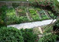 Использование соли в огороде. Волшебная соль