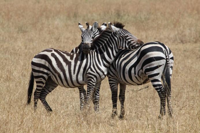 Как животные проявляют нежные чувства