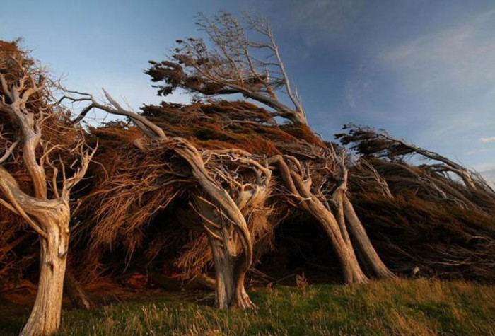Ветер — стилист (Фото)