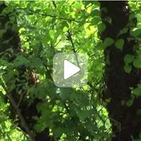 Колодное пчеловодство. Часть3. Ошибка первая- высокие деревья. ПРП Счастливое, Молдова