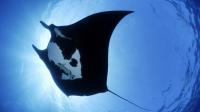 Завораживающий подводный мир