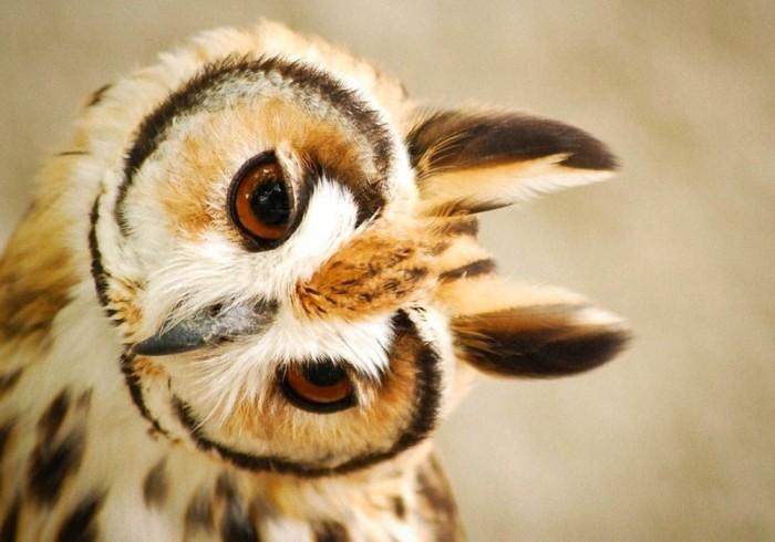 Мудрая птица