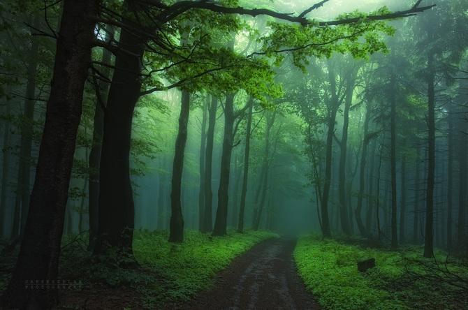 Сказочный лес фотографа Янека Седлера