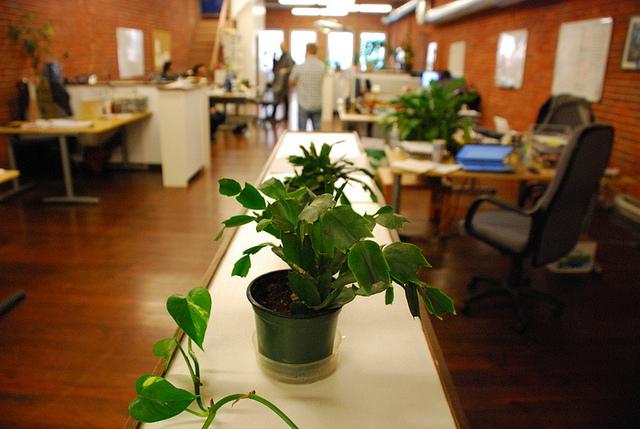 Растения в офисе повышают концентрацию внимания и производительность труда