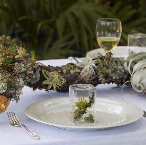 Удивительные растения-сувениры