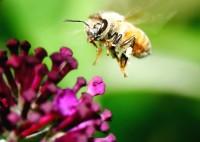 Неоникотиноидные пестициды даже более опасны, чем считалось ранее