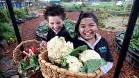 Тысячи школ во Франции будут иметь огороды, возделываемые учениками