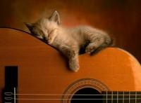 Кто может заснуть в любой позе? Подборка позитивных фотографий