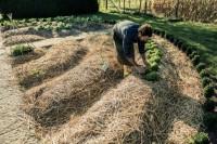 5 принципов успеха органического фермера