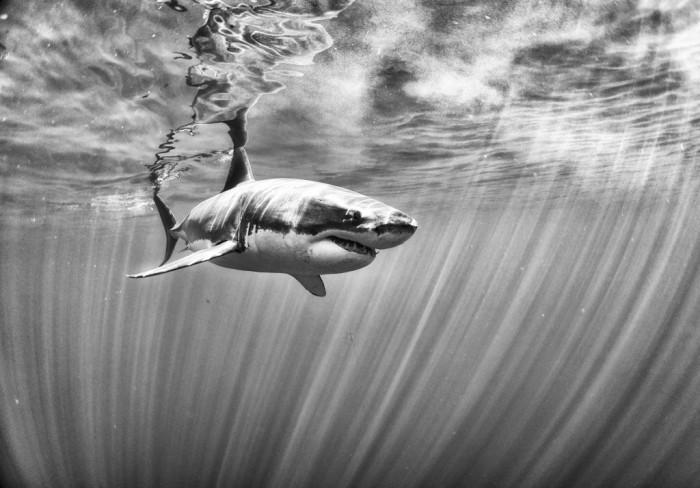 Удивительный подводный мир, в черно-белом