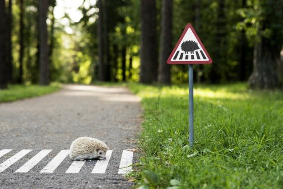 Миниатюрные дорожные знаки для защиты животных в городе