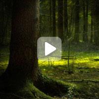 Беседа с Ефимовым В.А. о проекте Евразийский лесопровод: от Урала до Арала