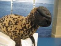 На грани исчезновения: 9 удивительных и невероятных животных