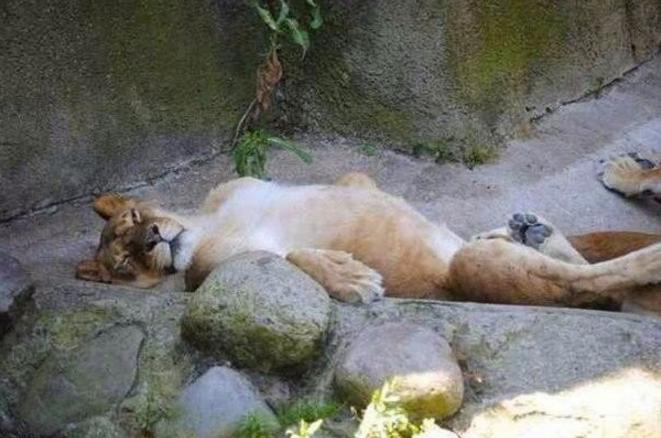 Они научат вас, как надо правильно расслабляться