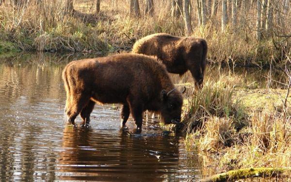 То, что ученые обнаружили в чернобыльском лесу, шокировало весь мир