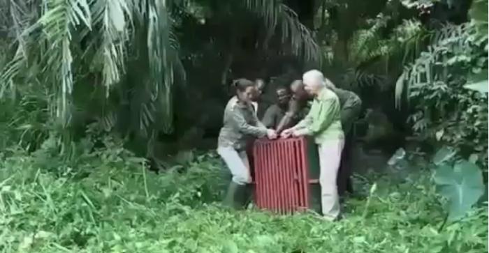 Emoție pură (Video)