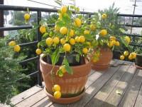 4 болезни, которые можно лечить с помощью лимона