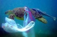 На каждые 3 тонны рыбы приходится тонна пластика