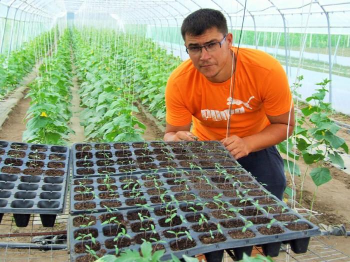 Экологически чистые «черри» уже выращивают в Молдове