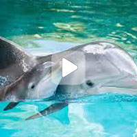 Кит и дельфин гуляют с детьми