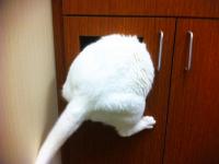 Коты, которые подумали, что они отлично спрятались