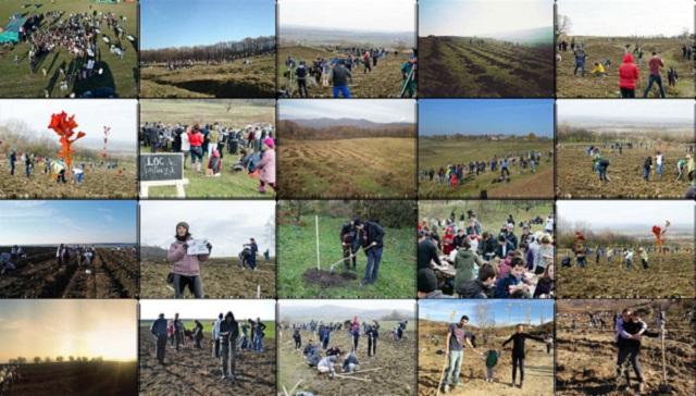 Более 150 000 саженцев было посажено в крупнейшей в истории добровольной акции по облесению в Румынии и Молдове