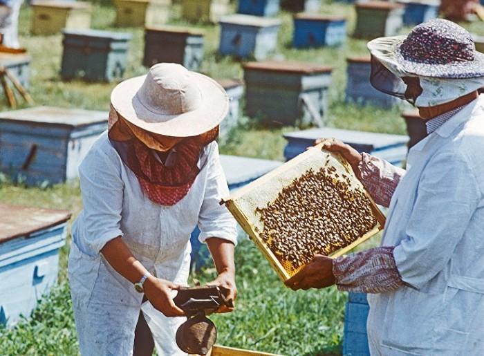 Ноу-хау пчеловода-изобретателя из Молдовы уже 30 лет никому не нужно