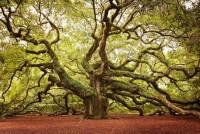 8 самых красивых деревьев мира. Просто не верится, что они растут на нашей планете!