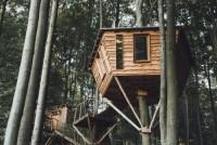 Экологичные гнёзда для Робин Гудов