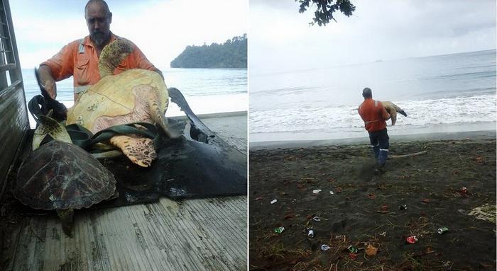 Один в поле – воин! Мужчина покупает на рыбном рынке черепах и выпускает их назад в море