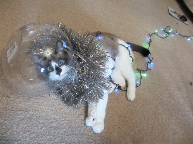 Животные, которые не дадут заскучать хозяевам в Новый год