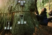 Девушка прожила два года на дереве, чтобы защитить его