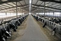 22 факта о вреде промышленного животноводства
