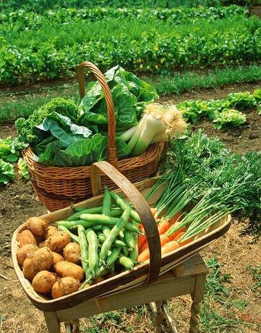 Как сохранить овощи на зиму. Технология, способы и условия хранения овощей